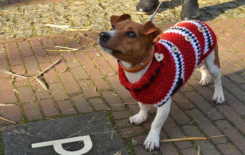 Preppy Dog Names - über 120 perfekte Ideen