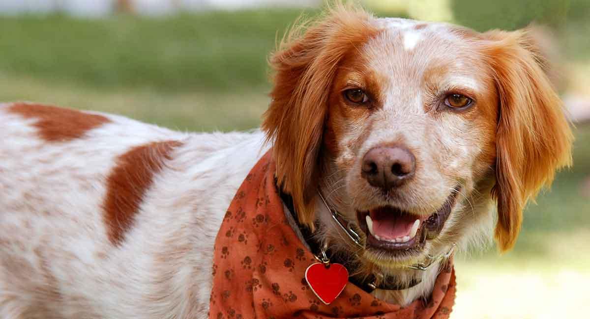 13 Awesome Pet ID-Tags, die Sie und Ihr Welpe lieben werden