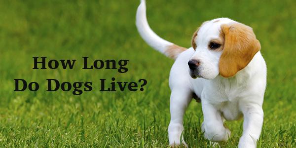 Wie lange leben Hunde? Ein vollständiger Leitfaden für die Lebensspanne von Hunden