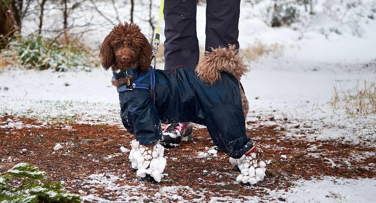Beste Hunde-Wanderschuhe für Off-Road-Walking mit Ihrem Welpen