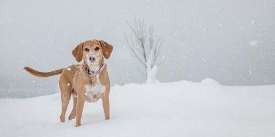 55+ Winter Dog Names - kreative Namensideen für Ihren Welpen