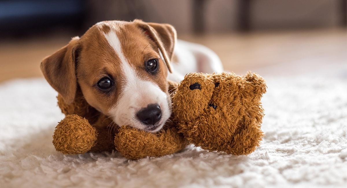 Kleine Hundenamen