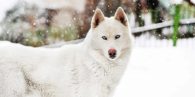 Atemberaubende alaskische Hundenamen