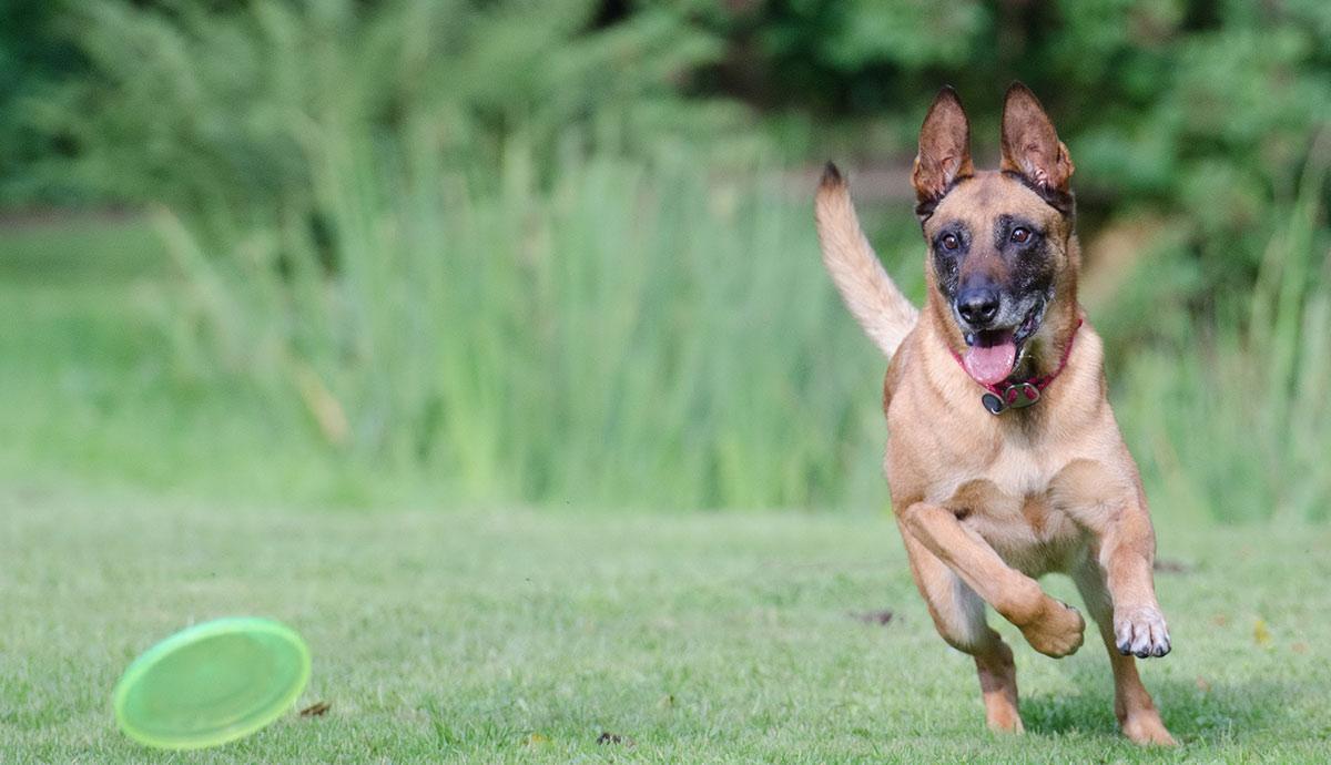 Stufe 1: Hundetraining beginnt hier