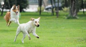 Ihr Hund isst zu schnell? Whoa, Rover! Lassen Sie Ihren Hund langsamer essen