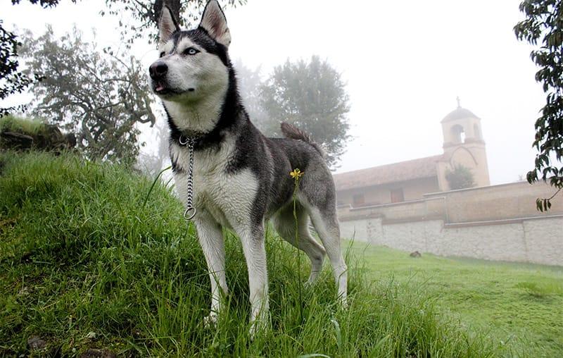 125+ einzigartige und schöne russische Hundenamen