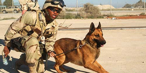Military Dog Names - 50+ Awesome Name Optionen