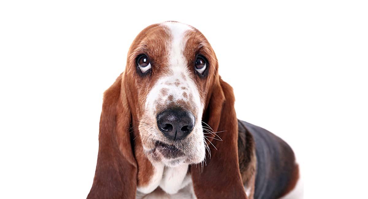 Gehörloser Hundetraining - Tipps und Techniken für Expertentraining