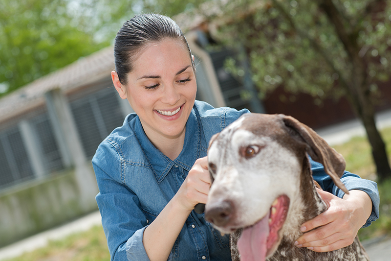 50 beste Geschenke für Hundeliebhaber