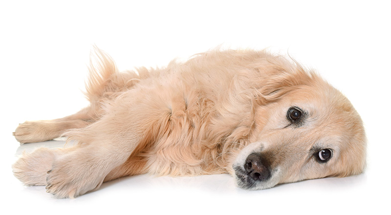 8 Möglichkeiten, wie Sie die Gesundheit Ihres Hundes ernsthaft verletzen, ohne es zu merken