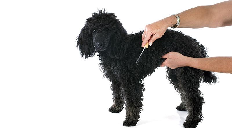 4 brillante Tipps, damit Ihr Hund glänzend und gesund bleibt