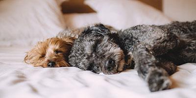 7 Gründe, warum Sie Ihr Bett mit Ihrem Hund teilen können, ist erstaunlich