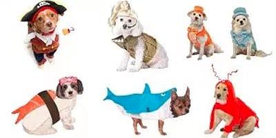 15 witzige Halloween-Kostüme für Hunde