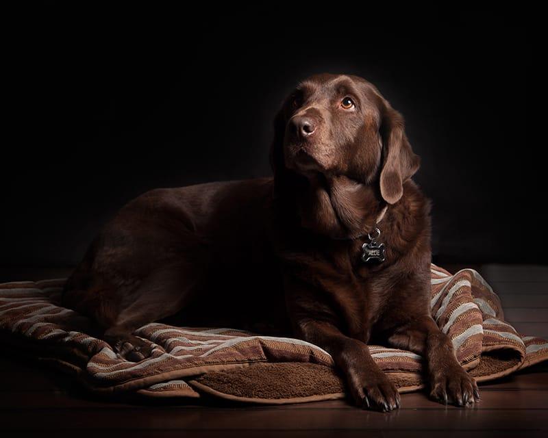 100 braune Hundenamen, die Sie lieben werden