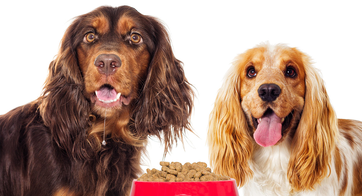 Bestes Hundefutter für empfindlichen Magen