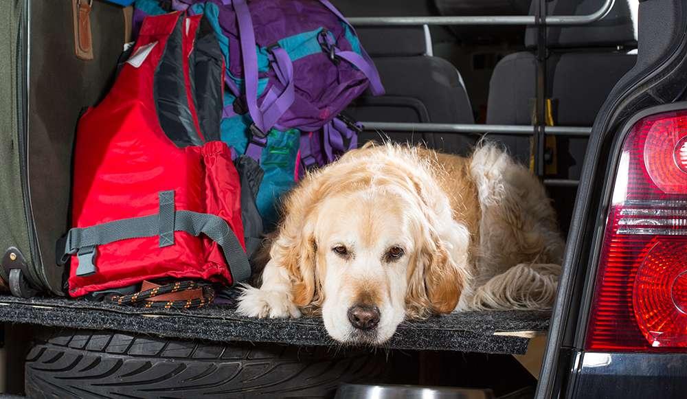 Mein Hund kommt nicht ins Auto!