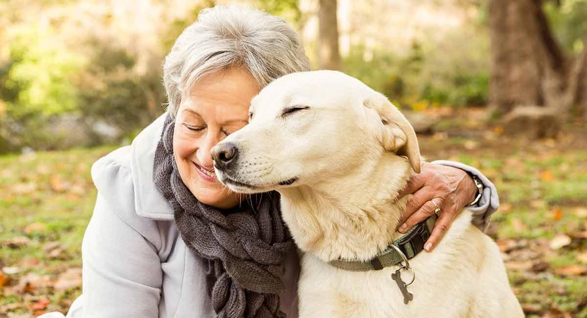 Ruhige Hunderassen - die entspanntesten Begleiter des Hundes