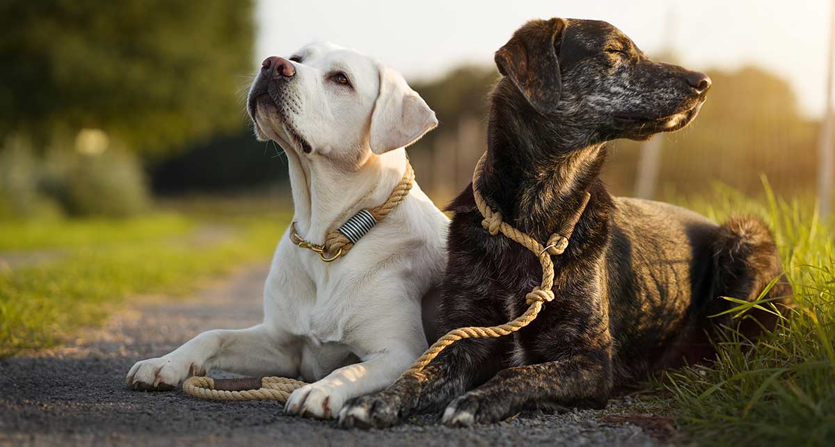 Der Beweis für positives Verstärkungstraining bei Hunden