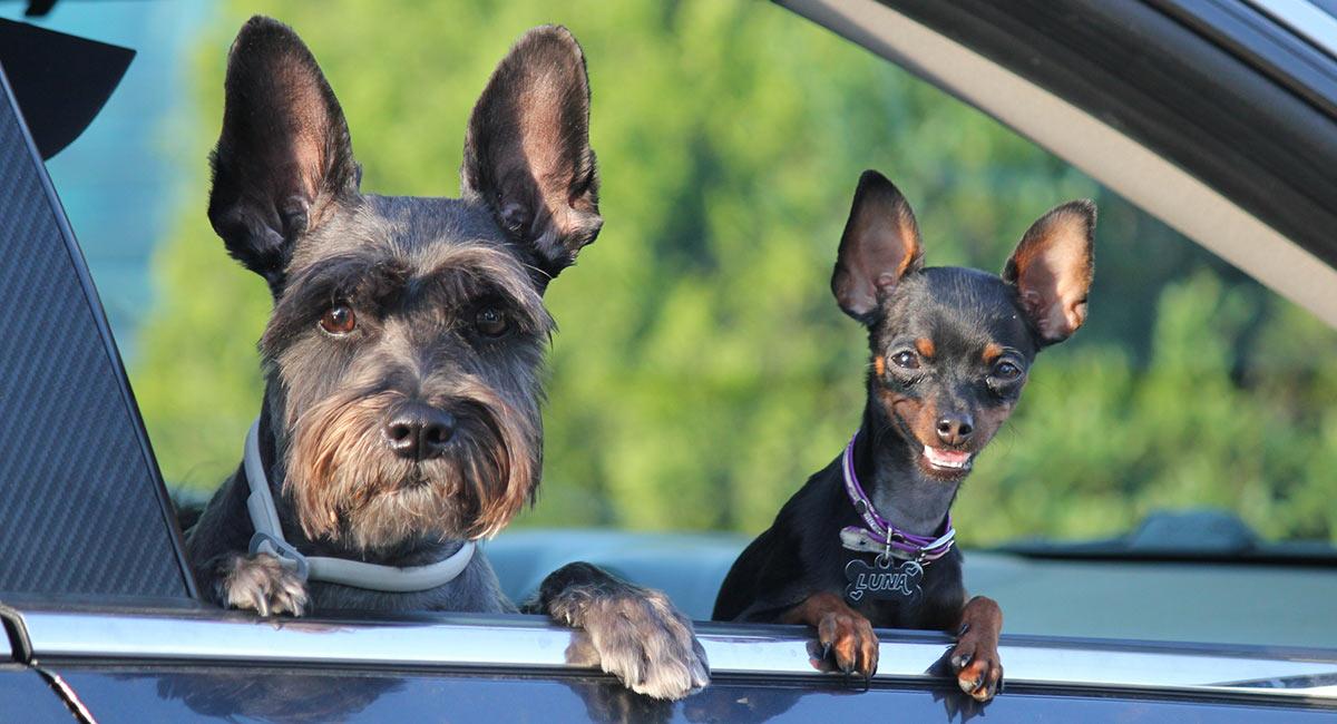 Traditionelles Hundetraining gegen moderne Methoden