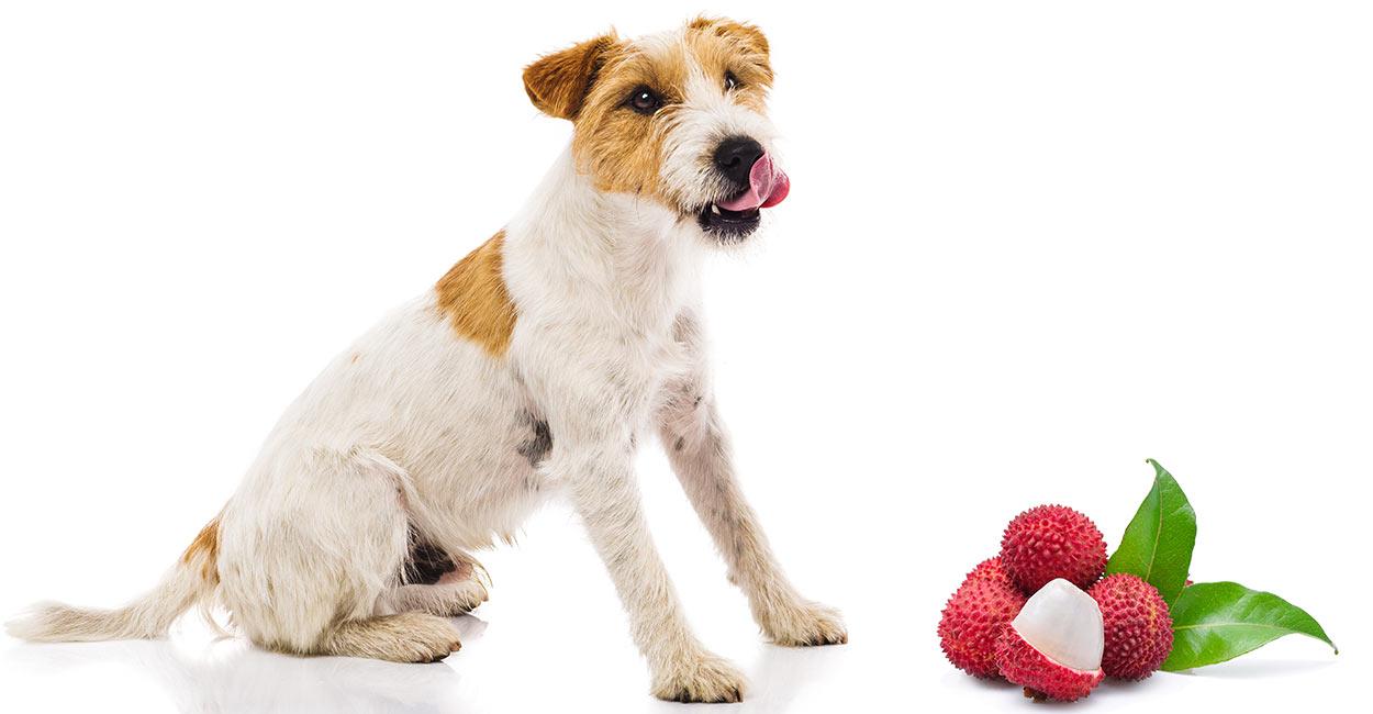 Können Hunde Litschi essen?