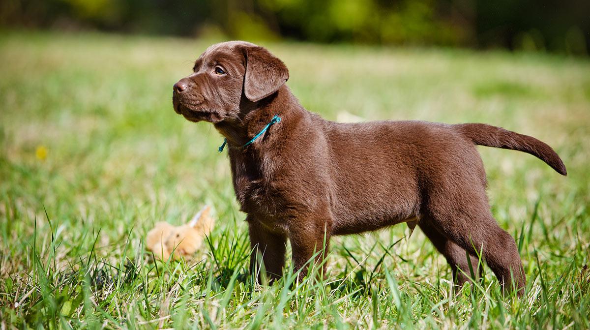 Dog Training Guides - Lektionen und Übungen von Pippa Mattinson