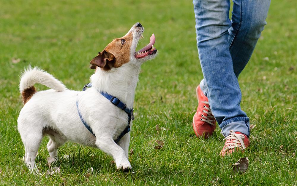 Senden Sie Ihren Hund zum Training - Puppy School Pro und Contras