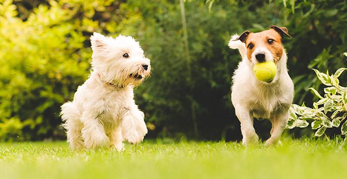 9 Möglichkeiten für eine erfolgreiche Hundetrainingseinheit
