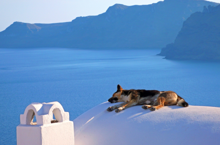 Griechische Hundenamen - 90+ kulturelle, coole Ideen