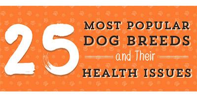 Beliebte Hunderassen und ihre Gesundheitsprobleme