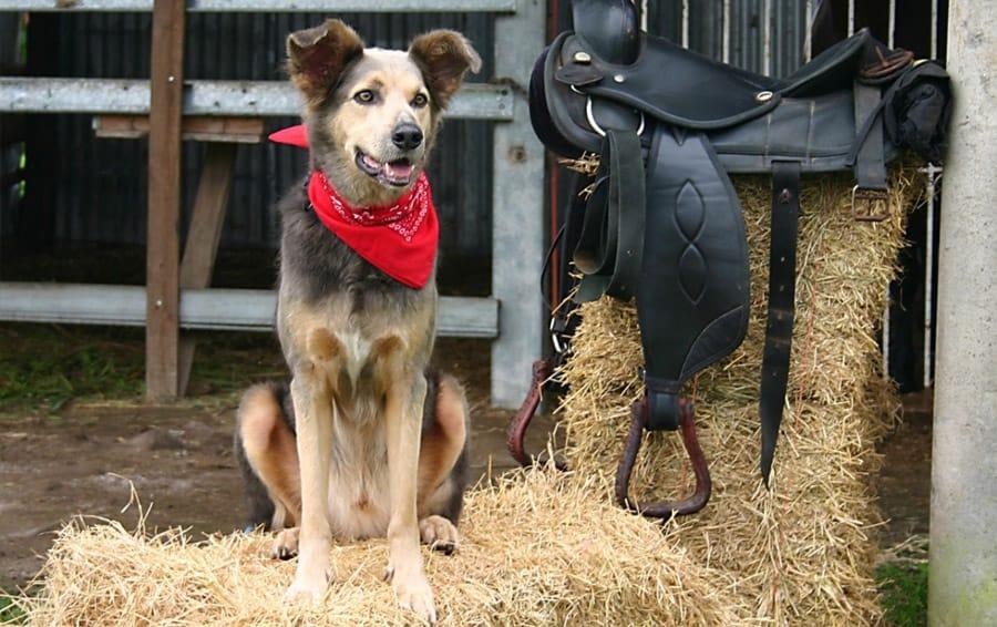 Awesome Country Dog Names - 175 südliche Namen, die Sie lieben werden