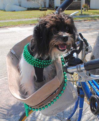 Irische Hundenamen - 105 fantastische Namensideen für Ihren Hund