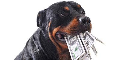 Das Budget Survival Guide des Hundebesitzers - kostenlos!