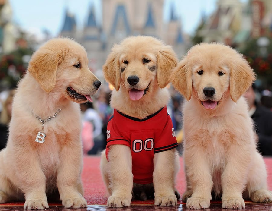 Disney Dog Names - 211+ Super Disney Names