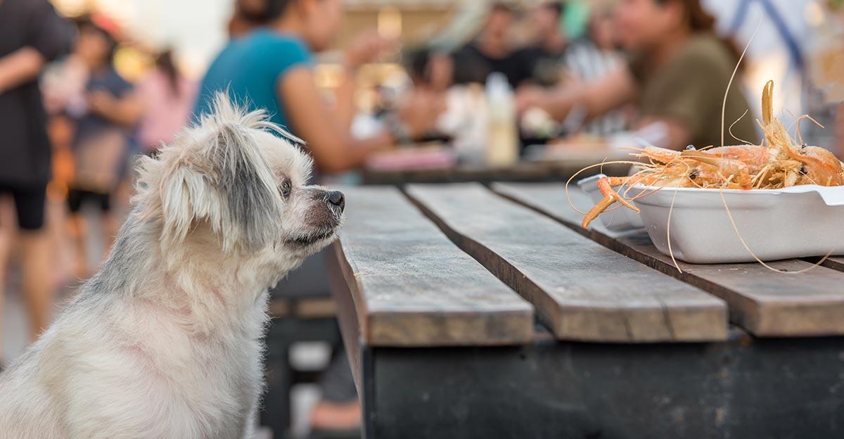 Können Hunde Garnelen essen
