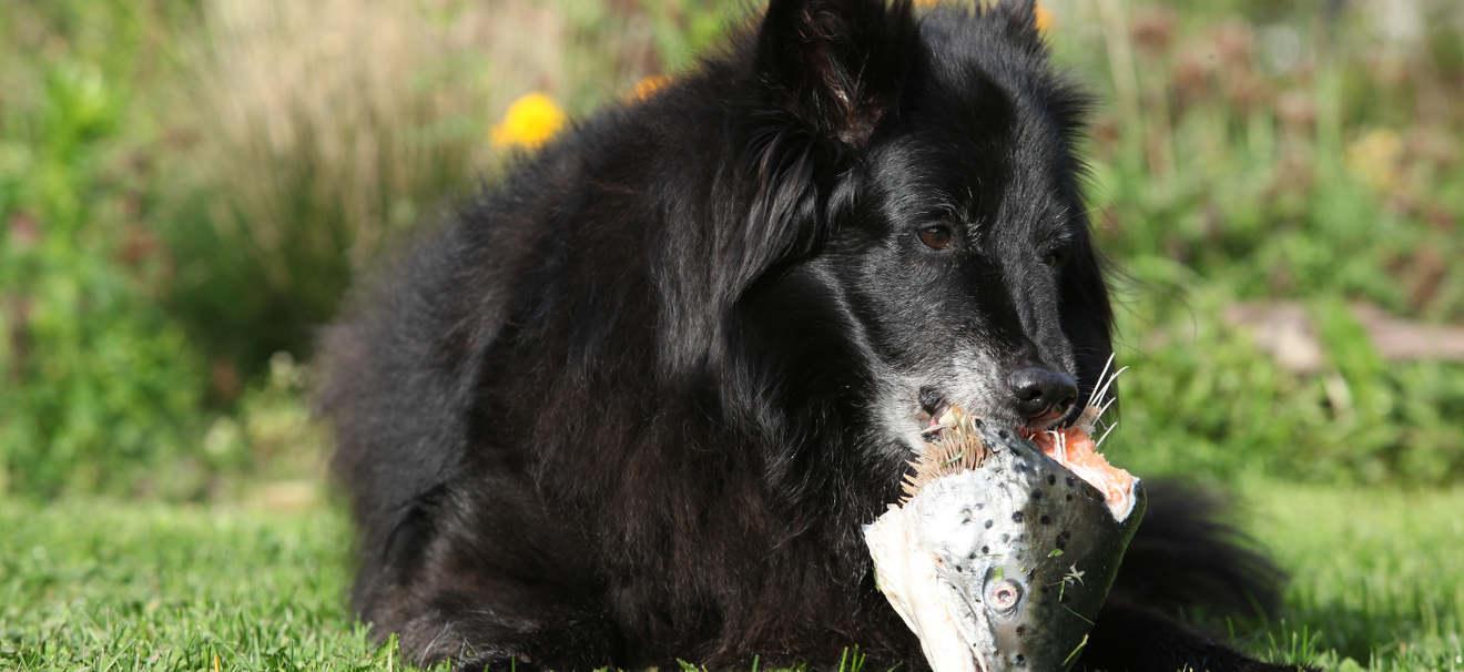 9 Tolle Ideen für natürliches rohes Hundefutter