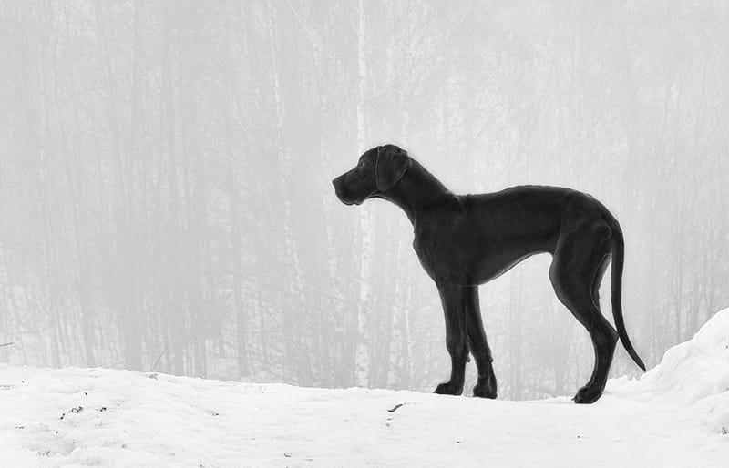 Die ultimative Liste der Namen der Deutschen Dogge