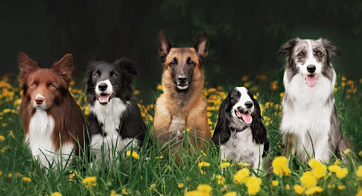 Doggy Daycare - die richtige Wahl für Sie und Ihren Welpen?