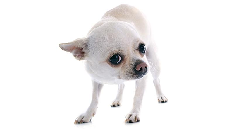 So beruhigen Sie Ihren verängstigten Hund