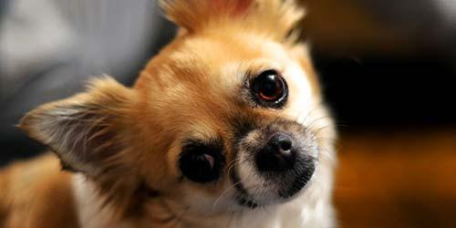 20 super süße junge Hundenamen