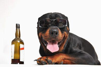 Deutsche Hundenamen - über 150 tolle Namen für Ihren Hund