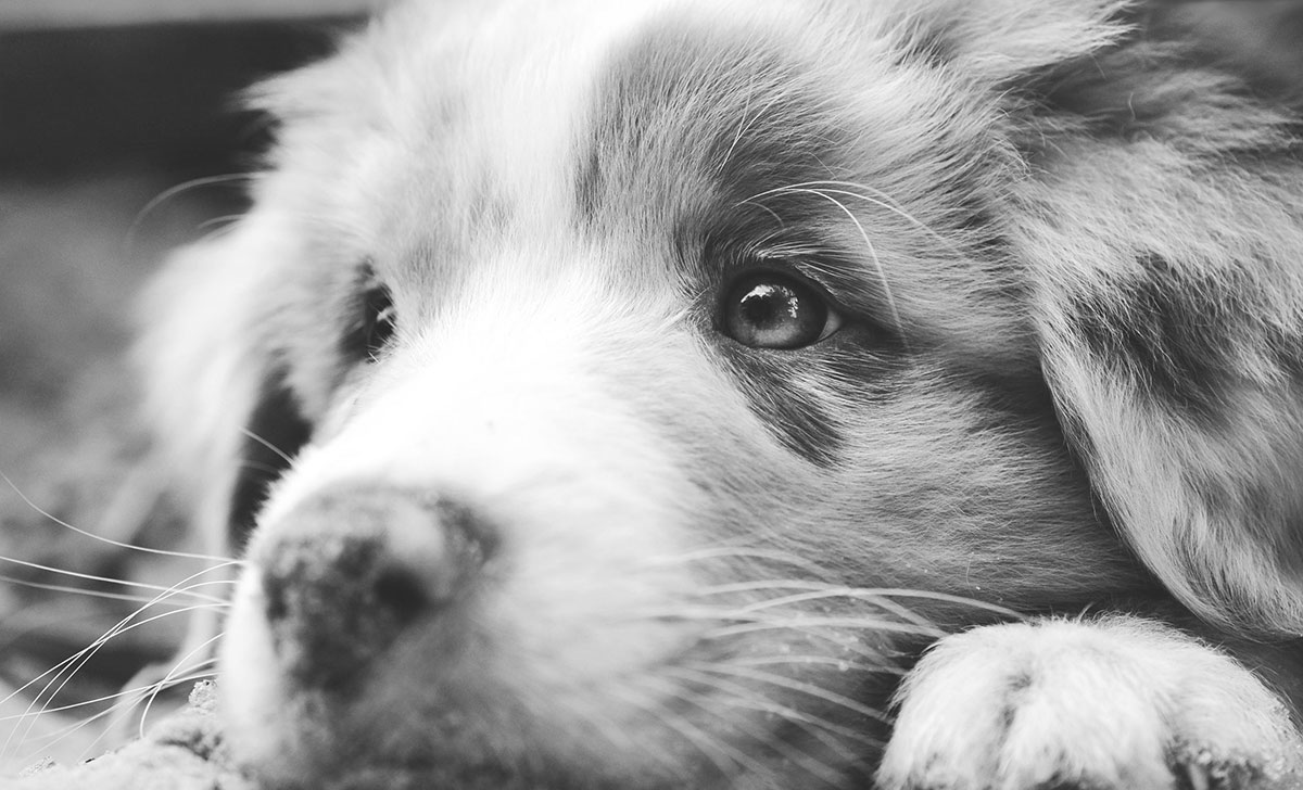 Negative Verstärkung im Hundetraining