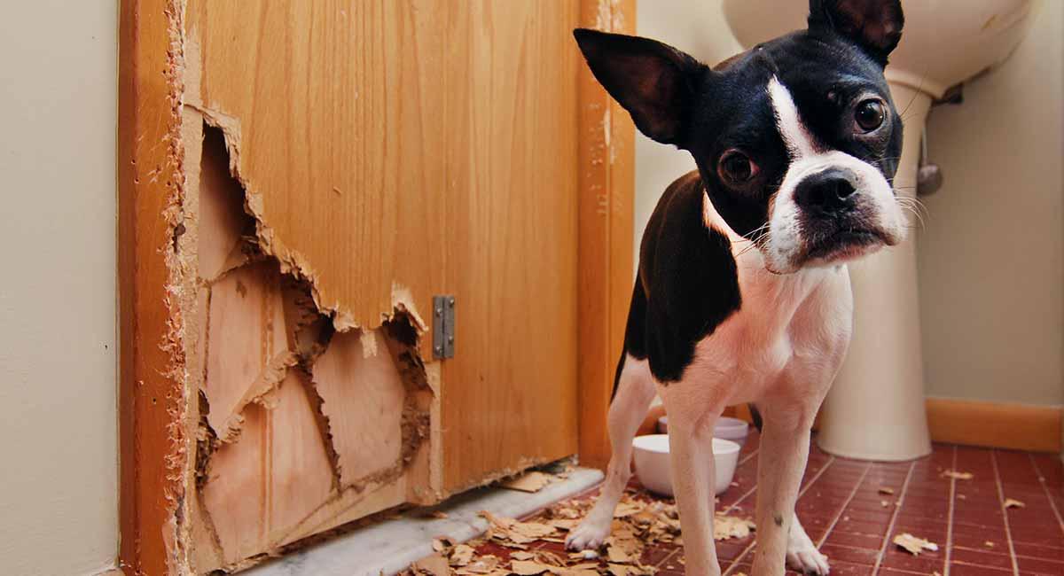 Wie man einen Hund davon abhält, seine Sachen zu kauen!