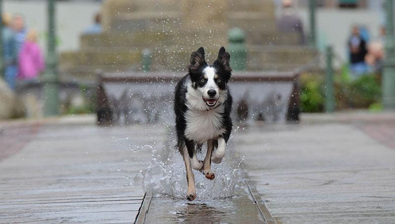 Städtenamen für Hunde - über 140 coole Ideen
