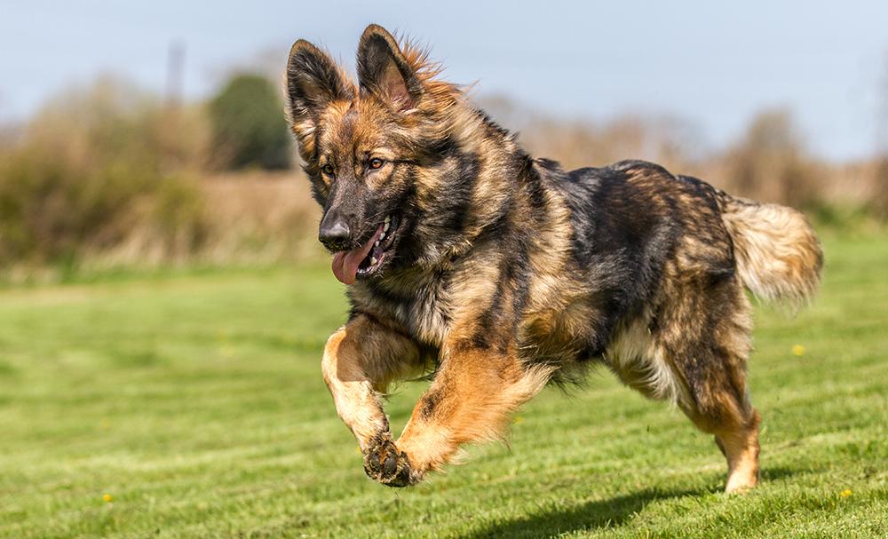 Verstärkung im Hundetraining