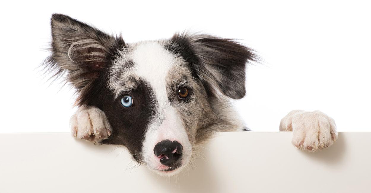 Können Hunde Truthahnspeck essen?