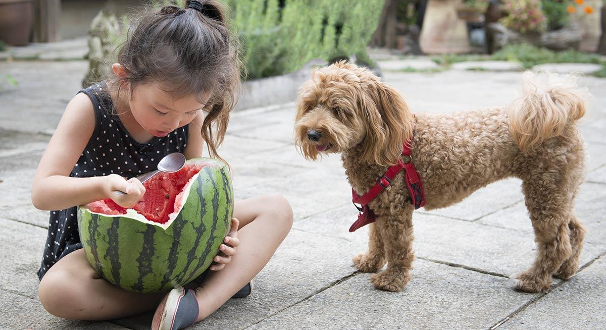 Können Hunde Cantaloupe und andere Melonenarten haben?