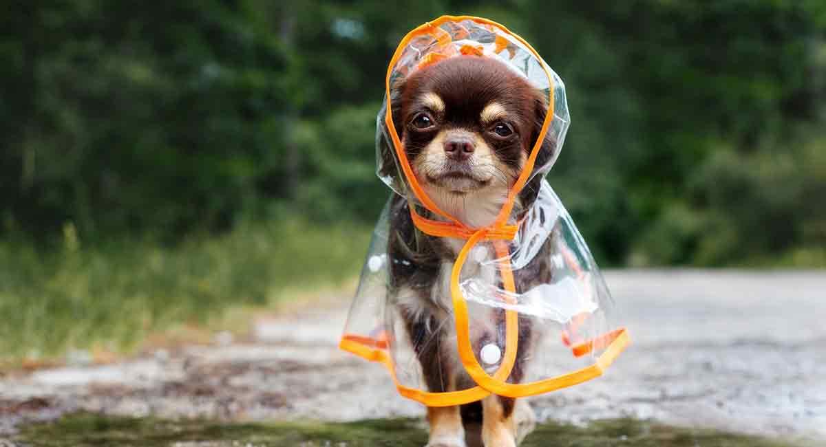 Beste Regenmäntel für Hunde - Halten Sie Ihren pelzigen Freund trocken