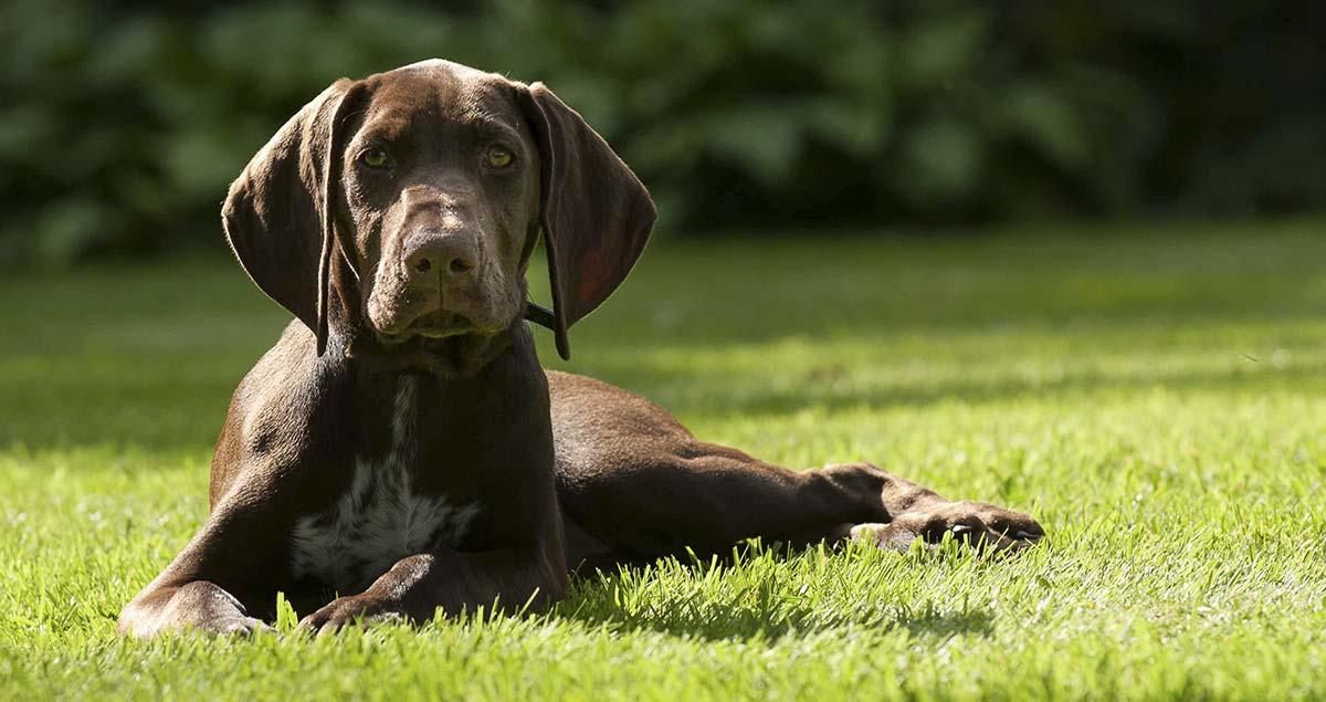 Sporting Dogs - Ein Leitfaden für Jagdhunde und Jagdhundrassen