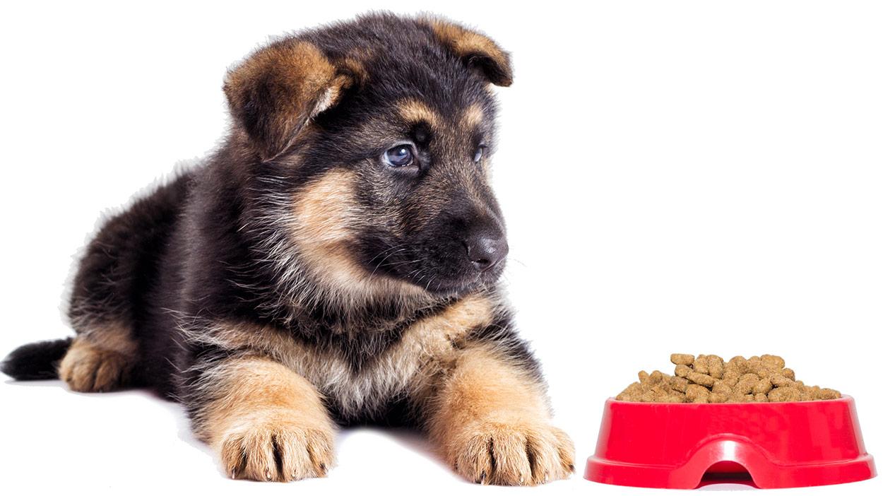 Beste Nahrung für Deutsche Schäferhund-Welpen