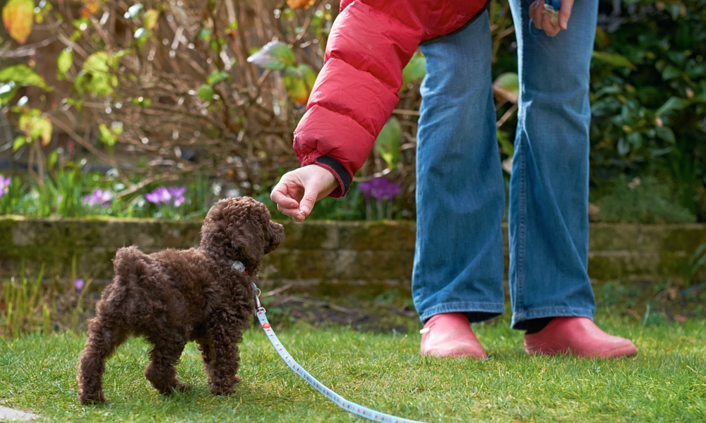 Pfeife oder Clicker - Hundetrainingsignale und wie man zwischen ihnen wählt